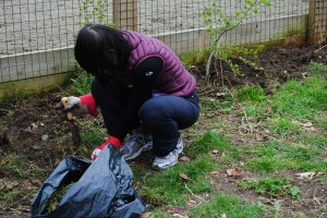 Planting tree whip Brixton London