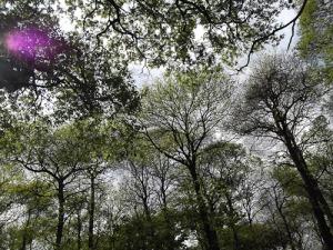 Bannockburn Primary School nature walk Lesnes Abbey Wood London_-16
