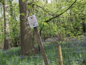 Bannockburn Primary School nature walk Lesnes Abbey Wood London_-20